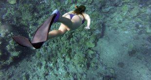 Jangan Lewatkan Kesempatan Menelusuri Keindahan Bawah Laut di 5 Tempat Wisata Diving Terbaik Di Sulawesi