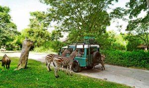 Bali Safari Marine Park 1