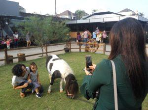 Wisata Kuda Johnsto