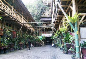 rumah pohon yogyakarta