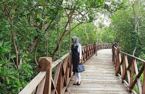 wisata hutan mangrove langsa