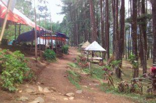 Hutan Pinus Kare Madiun