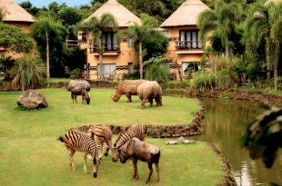 Wisata Safari Di Provinsi Bali Yang Wajib Kamu Kunjungi
