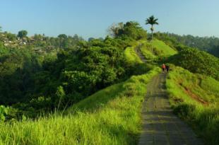 Menikmati Keindahan Bukit Campuhan Ubud Bali Yang Tersembunyi