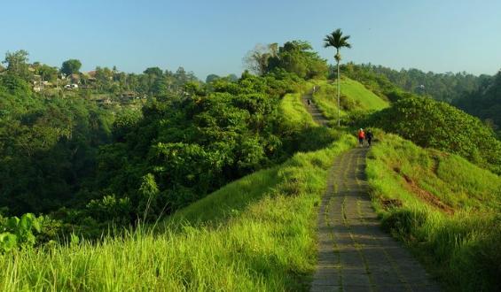 Menikmati Keindahan Bukit Campuhan Ubud Bali Yang Tersembunyi!