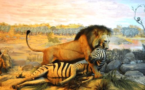 Pengetahuan Fauna
