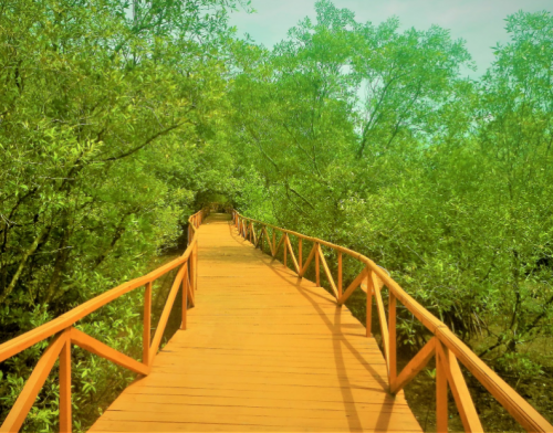Hutan Mangrove Pangandaran2