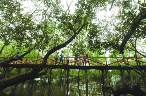 Hutan Mangrove Pangandaran3
