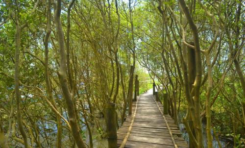 Hutan Mangrove Pasir Kadilangu2