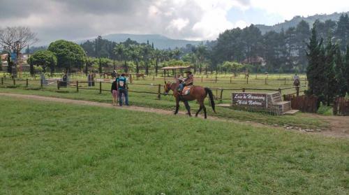 Kuntum Farm Field6