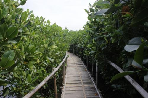 Maron Mangrove Edupark2