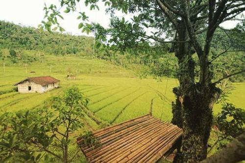 Rumah Pohon Kali Kulon