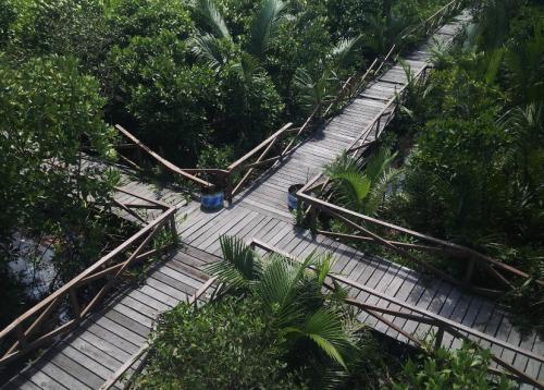 Wisata Hutan Payau Mangrove