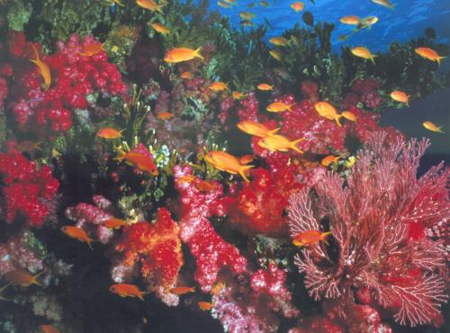 Wisata Mawar Laut Kabupaten Ngada