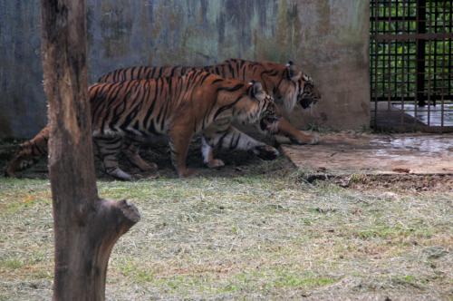 Fasilitas yang tersedia di wisata Kebun Binatang Medan2