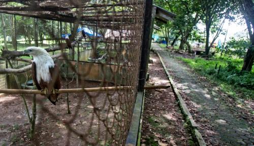 Harga tiket masuk wisata Kebun Binatang Medan