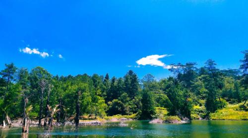 Hutan Pinus Lahendong