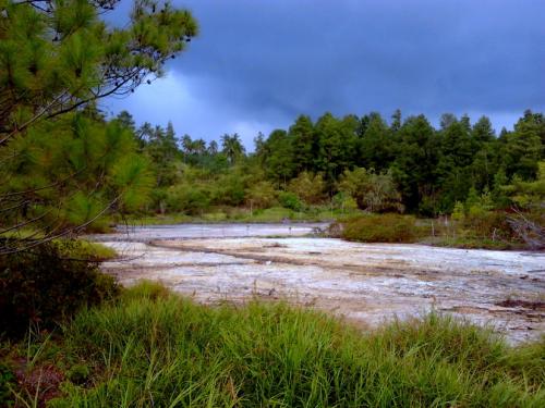 Hutan Pinus Lahendong2