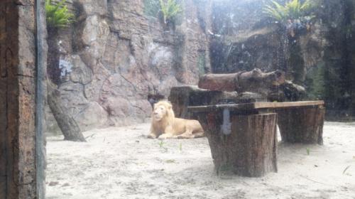 Lokasi wisata Kebun Binatang Medan