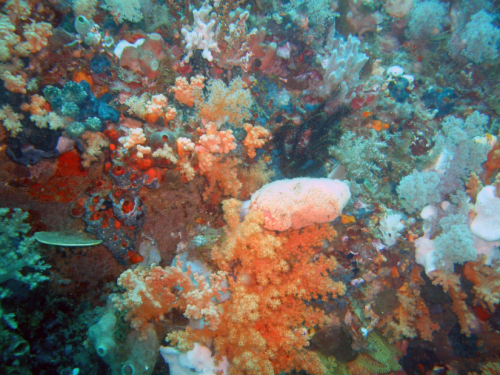 Pulau Bangka Sulut