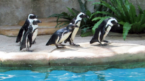 Kebun Binatang Gembira Loka2