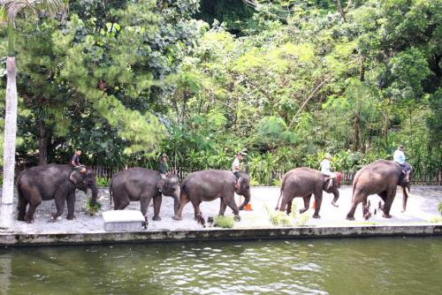 Kebun Binatang Gembira Loka3