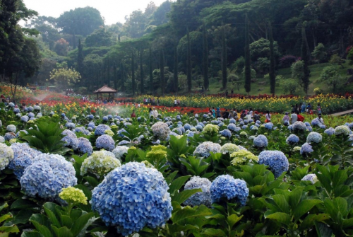 Kota Bunga Tomohon
