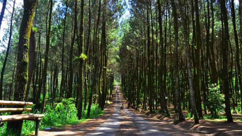 Pinusan Kragilan