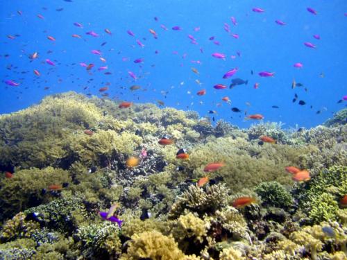 Pulau Bunaken2