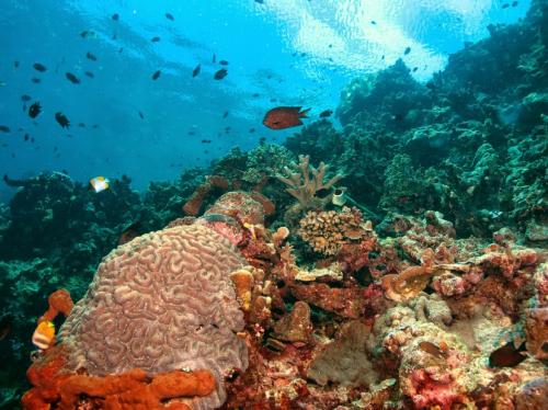 Pulau Bunaken3