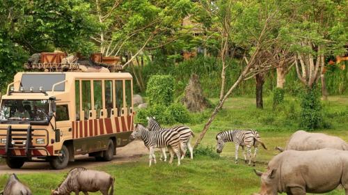 Taman Bali Safari and Marine Park