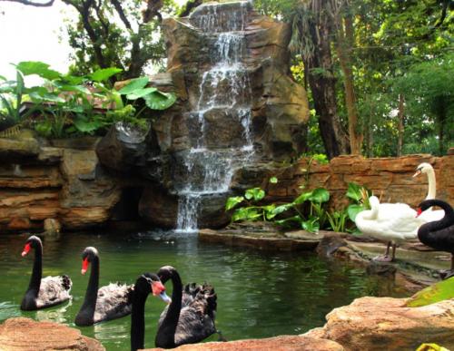 Dunia Aves Kebun Binatang Surabaya
