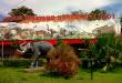 Kebun Binatang Surabaya Sebagai Sarana Edukasi Sekaligus Hiburan