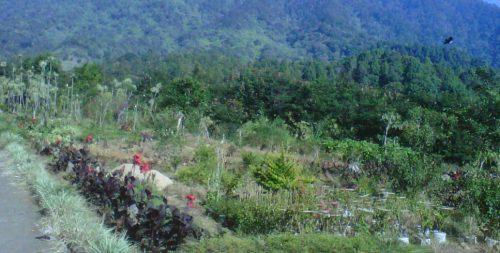 Bukit Geger madura