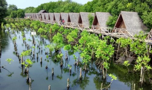 Hutan Mangrove Pantai Indah Kapuk yang eksotis